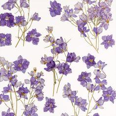 Violet Fields, Lumicor