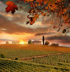 Feast of colour… Tuscany's autumn landscapes are as irresistible as its food