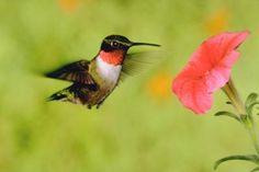 Planificar el jardín para colibries y mariposas   eHow en Español