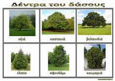 Νηπιαγωγός από τα πέντε...: δάσος Environment, Activities, Architecture, School, Plants, Trees, Outdoors, Spring, Greek