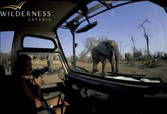 The Wilderness Way – a brief history Humble Beginnings, 30 Years, Conservation, Wilderness, Safari, Elephant, Africa, Camping, History