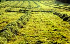 Gemaaid gras, Geuldal, Limburg - Tombstone65