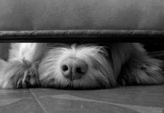 Cuando la alegría duele http://www.mascotadomestica.com/articulos-sobre-mascotas/como-afecta-la-pirotecnia-a-las-mascotas-2.html