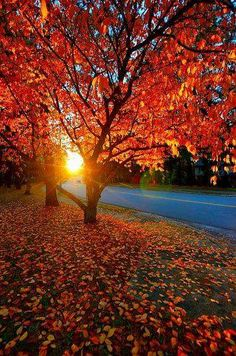 Sunlight through the beautiful Fall leaves. Sunlight through the beautiful Fall leaves. Fall Pictures, Fall Photos, Nature Pictures, Beautiful World, Beautiful Places, Beautiful Pictures, Autumn Photography, Landscape Photography, Autumn Scenes