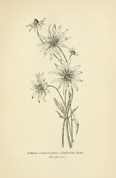 Harper's guide to wild flowers