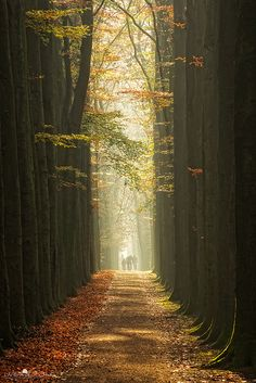 The path of autumn, Netherlands