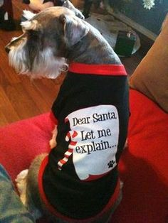 """""""I only misbehaved a few times!"""" #dogs #pets #Schnauzers  Facebook.com/sodoggonefunny"""