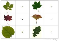 set of magnifying glass leaves and fruits trees - Theme Nature, Montessori Science, French Teaching Resources, Alternative Education, Lupe, Fall Preschool, Magnifying Glass, Land Art, Fruit Trees