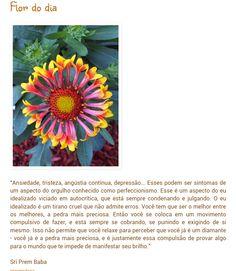 Flor do dia: perfeccionismo.
