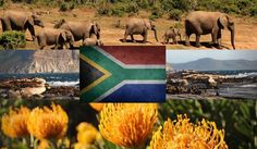 No matter where South Africans end up living abroad, there's no place like the one they left behind. The clichés are clichéd because they're so incredibly true: there really is no place like home. Africans, South Africa, Elephant, Live, Places, Painting, Animals, Art, Animales