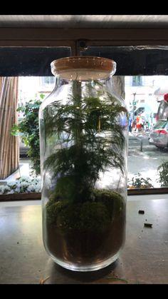 Terrarium avec asparagus