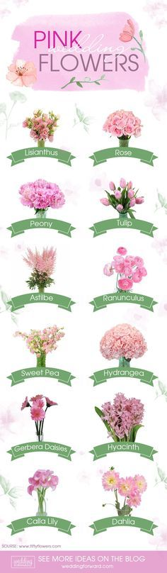 Learn about types of pink flowers and see pink flower images to help you find your perfect wedding flowers.