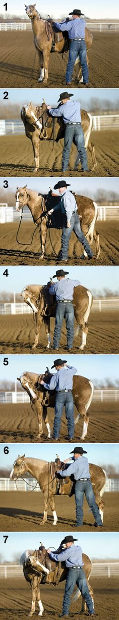 Flex Your Horse's Neck from the Ground By Clinton Anderson