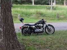 Harley Davidson sportster 1200 custom. Motorcycle photography Harley Davidson Sportster 1200, 1200 Custom, Motorcycle Photography