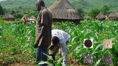 benefits of organic fertilizer to agriculture in Nigeria