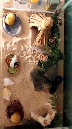 A homemade hermit crab habitat! Two water bowls (one fresh and one saltwater), a couple hiding places, some natural stuff for them to climb around on, a food bowl (they eat fruit!), and some shells for them to try on and play with.