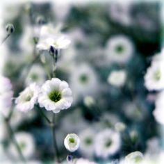 Nature does nothing useless. - Aristotele -