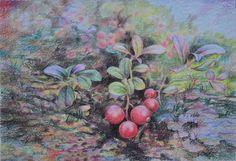 Василий Россин (Vasily Rossin), Заполярная брусникаPolar cranberries2015 г.Бумага, карандашPencil, paper32 х 22