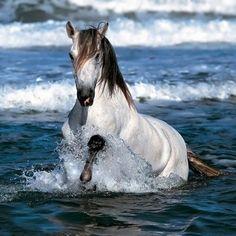 Having a fun dip in the ocean!