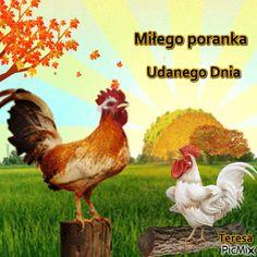 Smiley, Good Morning, Pictures, Animals, Gift, Autumn, Buen Dia, Photos, Animales