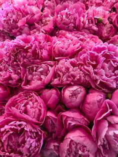 Peonies at Pike Place Market, Seattle, WA. Flower Bomb, My Flower, Flower Art, Pink And Gold Background, Flower Shower, Deco Floral, Flower Backgrounds, Flower Wallpaper, Pink Peonies