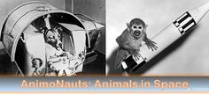 AnimoNauts 7 Animals who were launched to Space