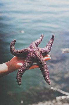 Starfish - beautifully wild.