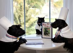 George and Laura Bush's dogs Barney, Miss Beazley, and cat India