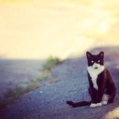 Do Outdoor Cats Get Sick More