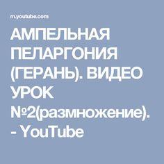 АМПЕЛЬНАЯ ПЕЛАРГОНИЯ (ГЕРАНЬ). ВИДЕО УРОК №2(размножение). - YouTube