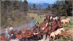 The Majestic Dude Ranch is a luxurious Colorado guest ranch.