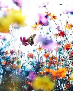 [New] The 10 Best Travel (with Pictures) - Posted The colors of A swallowtail butterfly in Japan. Photo by . Wild Flowers, Beautiful Flowers, Beautiful Pictures, Bouquet Flowers, Yellow Flowers, Belle Image Nature, Flower Aesthetic, Pretty Wallpapers, Flower Wallpaper