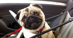 Dog Can't Contain Himself And It's ADORBS! | The Animal Rescue Site Blog