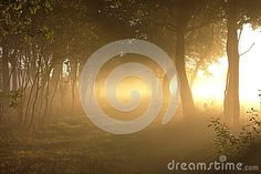 Photo about A classical sun filled morning image of a path through farm fields illumined in the morning fog by gold rays of the suns warm light. Image of foggy, edge, fields - 105044067 Morning Images, Sunrises, Fields, Paths, Glow, Around The Worlds, Warm, Outdoor, Beautiful
