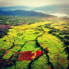 Amazing rice fields in #Laos