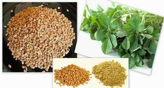 Fenugreek Methi – Hair Fall Treatment with Home Remedies for Men, Around of … - Modern Hair Loss Treatment, Fall Hair, Protective Styles, Home Remedies, How To Dry Basil, Natural Hair Styles, Herbs, Modern, Beauty