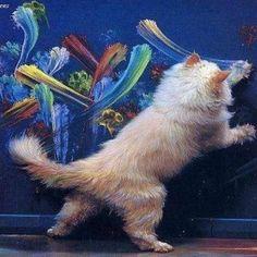 Cat art!