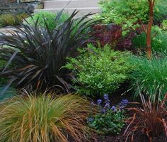Love grasses! — diane_lievers http://www.houzz.com/projects/882527/moraga-country-club-small-frontyard