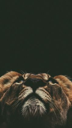 The animal kingdom is filled with almost an infinite variety of creatures. Scientists discover new species and subspecies every year. Lion Wallpaper Iphone, Animal Wallpaper, Nature Wallpaper, Wallpaper Backgrounds, Iphone Wallpapers, Beautiful Creatures, Animals Beautiful, Animals And Pets, Cute Animals