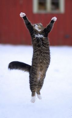"""""""I'm jumping for joy! No, actually this white stuff is killer cold on the pawdy paws!"""""""