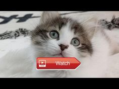 😸 Close Up Kittens 😹 😼 on Pet Lovers 🐼