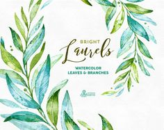 Laurels Bright. Watercolor separate elements, leaves and branches. Green, greenery, wedding invitation, foliage, cards, clipart, olive, leaf