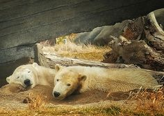 comfy as two bugs in a rug,Columbus Zoo,photo by Thomas Alexander