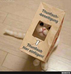 Thunfischbeseitigung. | Lustige Bilder, Sprüche, Witze, echt… #haha #spaß #lustig #joking #funnypics #witze #sprüchen #sprüchezumnachdenken #epic