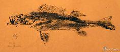 Gyotaku de perche commune