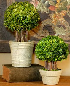 Boxwood Topiary Products on Houzz