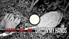 little bit of everything official lyric video