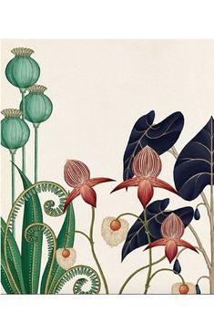 I also love this style of illustration illustration blume, nature illustration, botanical drawings, Illustration Art Drawing, Plant Illustration, Art Drawings, Vintage Illustration, Flower Drawings, Photo Illustration, Tattoo Drawings, Botanical Drawings, Botanical Prints