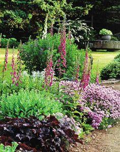 foxglove adds height to the garden