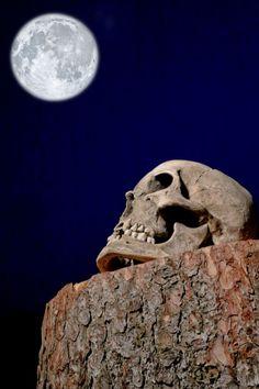skull for sale. #skull #skullreplica #human #bone #skeleton #calavera #tattoo #inked #skullart #photography #instaskulls #metal #grave #shot #shotglasses #scarynotscary #beautiful #life #death #kutnahora #czechrepublic #czechquality #kostnice #oldage #nothingisforever #mementomori Skull Decor, Skull Art, Calavera Tattoo, Skulls For Sale, Skull Model, Halloween Skull, Shot Glasses, Memento Mori, Beautiful Life